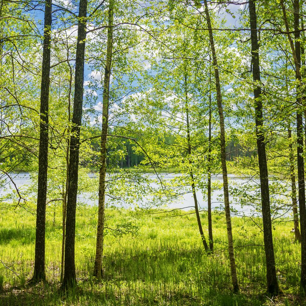 metsad-ruut